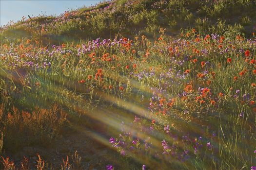 The wildflowers were in full bloom, the sun decided to photobomb the shot.  I think it added to the serenity of the photo.